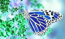Cazador de mariposas